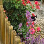 Katze Blumen