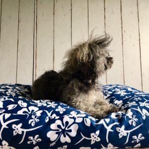 Hundekissen Seegras
